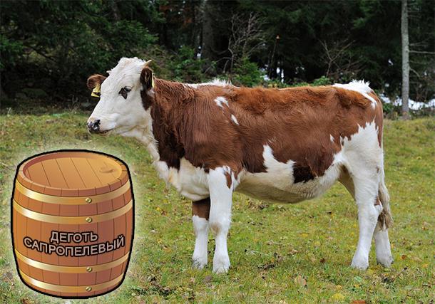 Деготь Сапропелевый для животноводства от компании ЗАО Респект